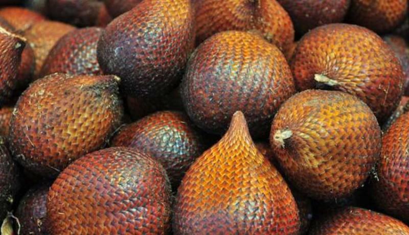 www.nusabali.com-salak-bali-tembus-pasar-ekspor