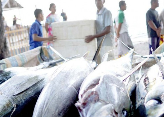 Nusabali.com - perdagangan-ikan-tuna-stabil