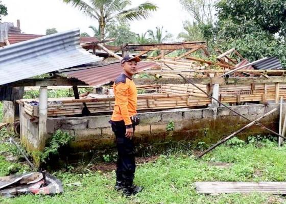 Nusabali.com - atap-gudang-kayu-dan-kandang-ayam-diterjang-angin