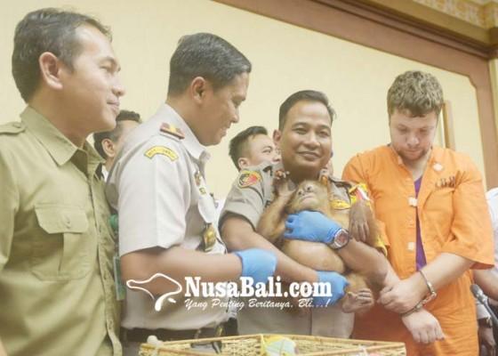 Nusabali.com - polisi-usut-penjual-bayi-orang-utan