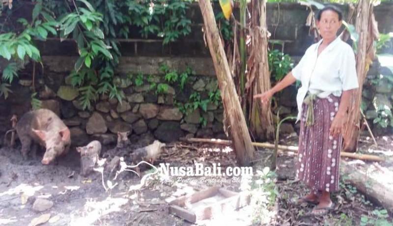 www.nusabali.com-anjing-liar-memangsa-ternak-warga