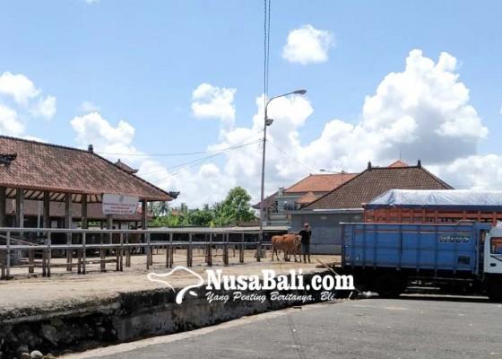 Nusabali.com - kebersihan-pasar-hewan-beringkit-jadi-sorotan