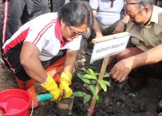 Nusabali.com - peduli-terhadap-lingkungan-pemkab-badung-tanam-5000-mangrove