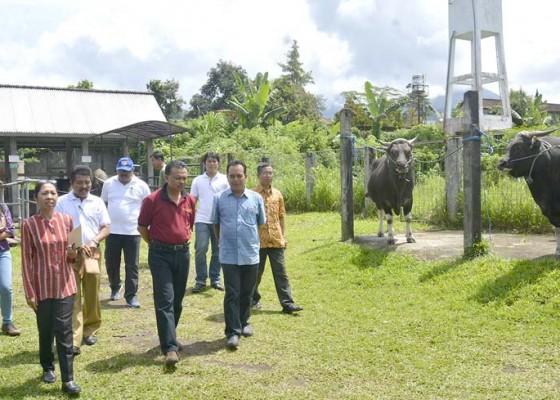 Nusabali.com - sperma-beku-sapi-bali-diminati-luar-daerah