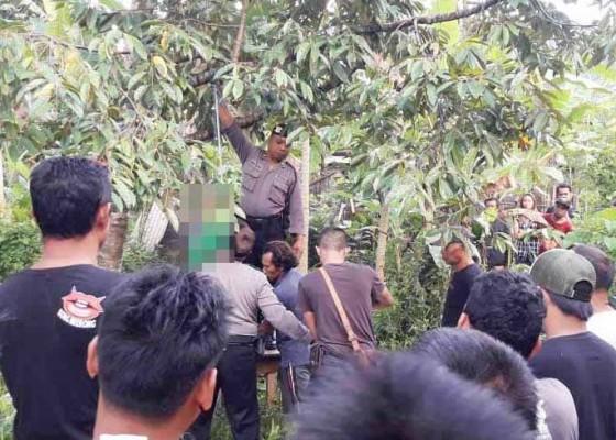 Nusabali.com - seorang-petani-gantung-diri-di-pohon-durian