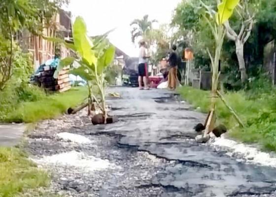 Nusabali.com - jalan-benyah-latig-warga-tanam-pohon-pisang
