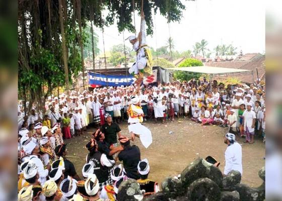 Nusabali.com - penari-rejang-bergelantungan-di-pohon-menari-dalam-kondisi-trance