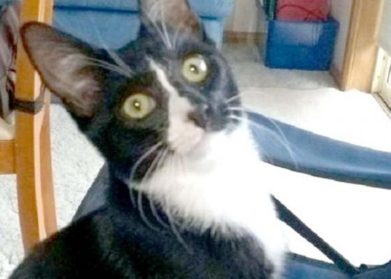 Nusabali.com - tergiling-mesin-cuci-kucing-selamat