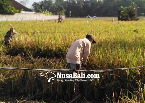 Nusabali.com - tabanan-dapat-jatah-10-ribu-ha-autp-gratis