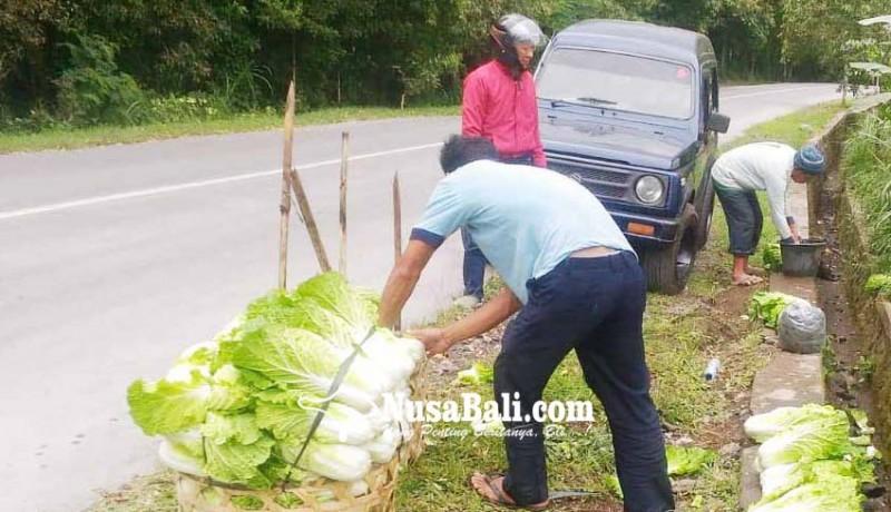 www.nusabali.com-terkena-abu-petani-cuci-sayuran-sebelum-dijual