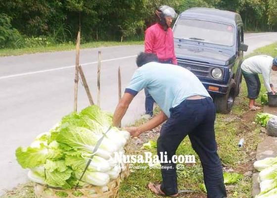 Nusabali.com - terkena-abu-petani-cuci-sayuran-sebelum-dijual