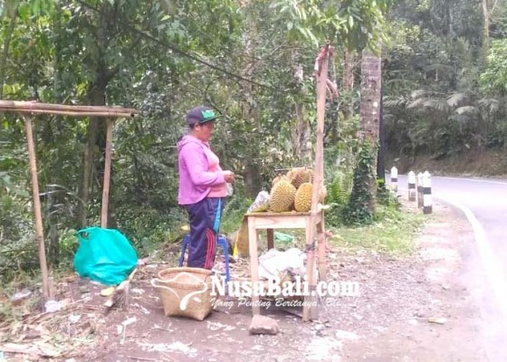 Nusabali.com - imbas-abu-vulkanik-buah-durian-tidak-maksimal