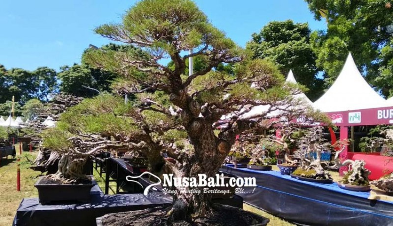 www.nusabali.com-lomba-bonsai-gianyar-berkelas-nasional