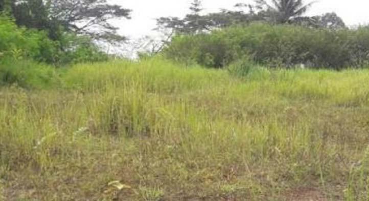 www.nusabali.com-lahan-67-hektare-di-pancasari-ditelantarkan