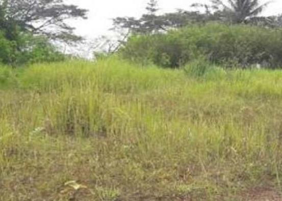 Nusabali.com - lahan-67-hektare-di-pancasari-ditelantarkan