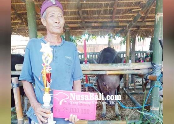 Nusabali.com - juara-i-lomba-sapi-bali-hadiah-dipakai-bayar-utang
