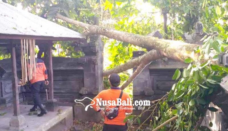 www.nusabali.com-candi-bentar-pura-kepuh-tertimpa-pohon-tumbang