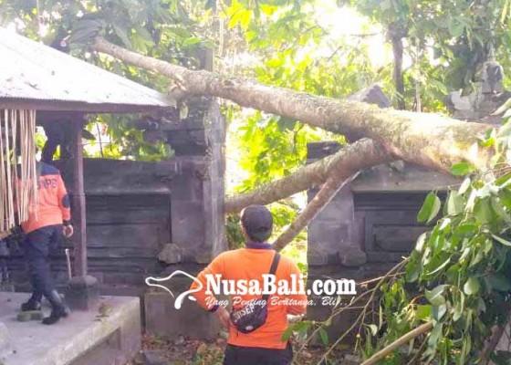 Nusabali.com - candi-bentar-pura-kepuh-tertimpa-pohon-tumbang