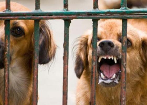 Nusabali.com - warga-diminta-laporkan-kasus-gigitan-anjing