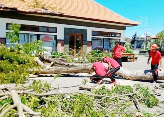 Nusabali.com - tertimpa-pohon-atap-gedung-tic-rusak