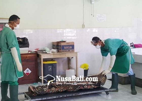 Nusabali.com - tiga-korban-gigitan-anjing-rabies-diawasi-dinkes