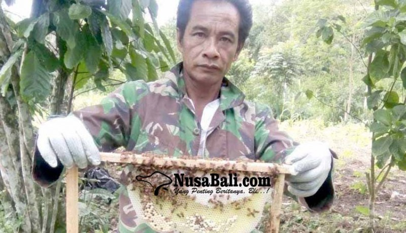 www.nusabali.com-beternak-lebah-panen-madu-200-botolbulan