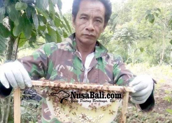 Nusabali.com - beternak-lebah-panen-madu-200-botolbulan