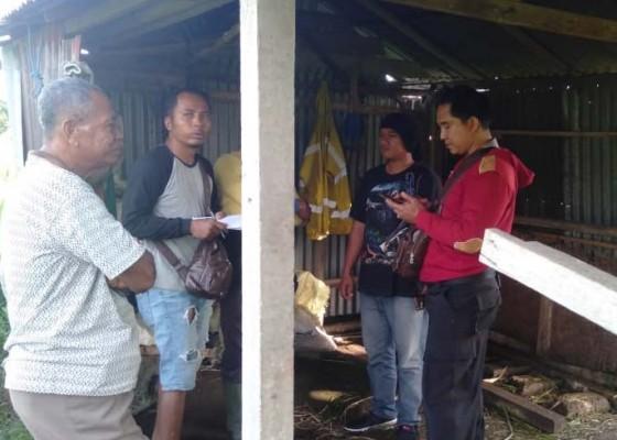 Nusabali.com - 2-ekor-sapi-di-satra-lenyap