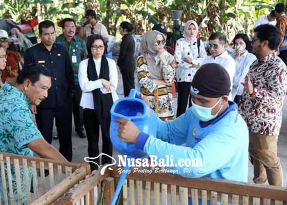 Nusabali.com - pelet-toss-bisa-gantikan-solar-dan-batubara
