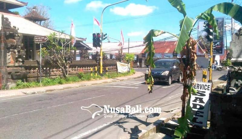 www.nusabali.com-kaling-gunaksa-berkebun-pisang-di-trotoar-erlangga