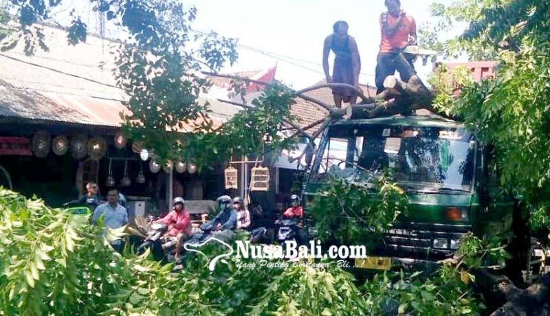 www.nusabali.com-tersangkut-truk-trailer-pohon-tumbang-ke-jalan