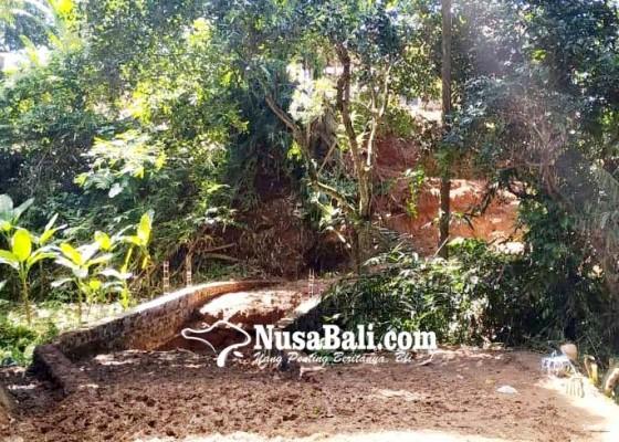 Nusabali.com - krama-desa-pakraman-puseh-akan-gelar-pecaruan-dan-guru-piduka