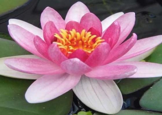 Nusabali.com - lentera-memanggil-roh-tua
