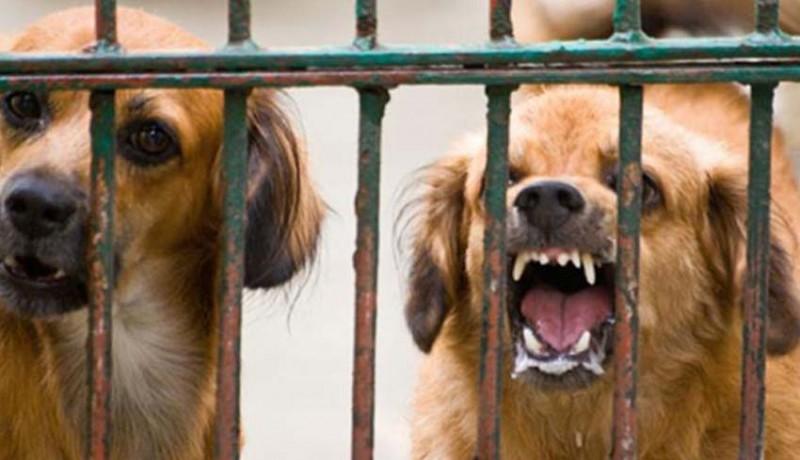 www.nusabali.com-11-ekor-anjing-di-akah-dieliminasi