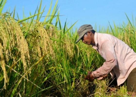 Nusabali.com - gagal-tanam-lahan-5-hektare-dikembalikan