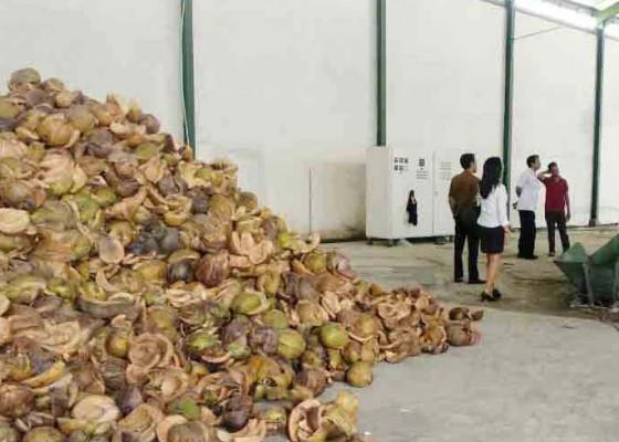 Nusabali.com - bali-siap-ekspor-serat-serabut-kelapa