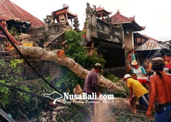 Nusabali.com - pohon-keramat-pura-desa-bila-timpa-palinggih