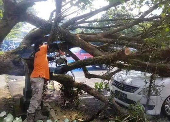 Nusabali.com - diterpa-angin-pohon-tumbang-timpa-mobil