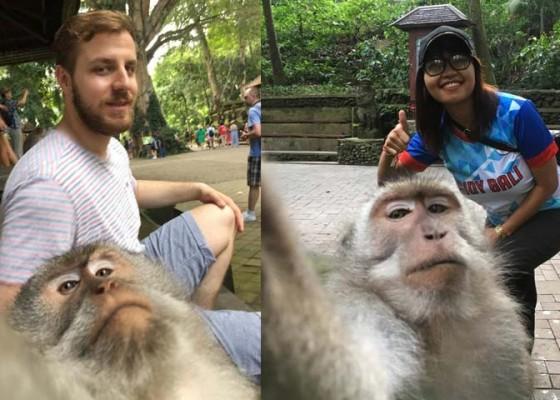 Nusabali.com - monkey-selfie-magnet-baru-objek-wenara-wana