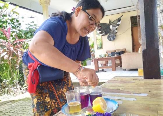 Nusabali.com - pkk-desa-kukuh-olah-bunga-teleng-jadi-teh