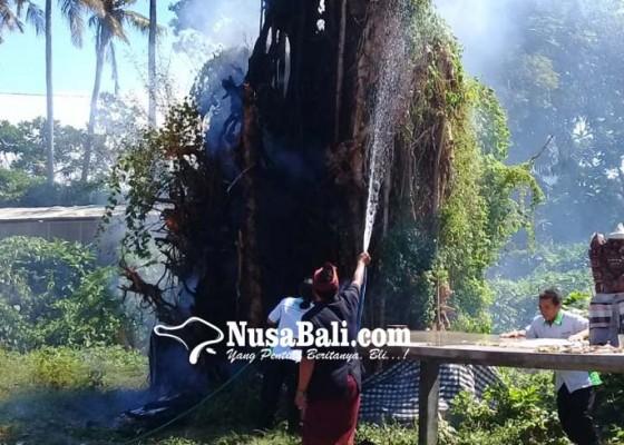 Nusabali.com - beringin-kantor-perbekel-negari-terbakar
