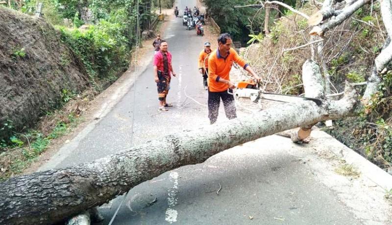 www.nusabali.com-pohon-kayu-santen-tumbang-jalur-bedha-sempat-tersendat