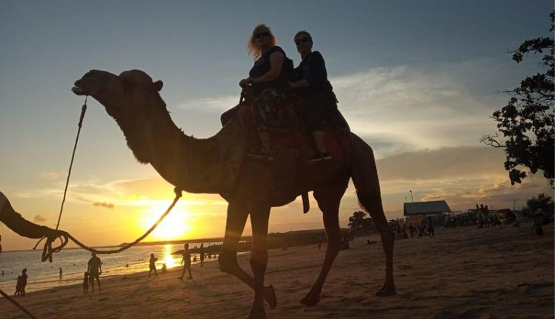 www.nusabali.com-safari-hewan-khas-gurun-pasir-di-pantai-pulau-tropis