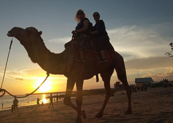 Nusabali.com - safari-hewan-khas-gurun-pasir-di-pantai-pulau-tropis