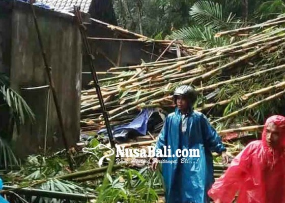 Nusabali.com - rumah-kelian-rusak-tertimpa-rumpun-bambu