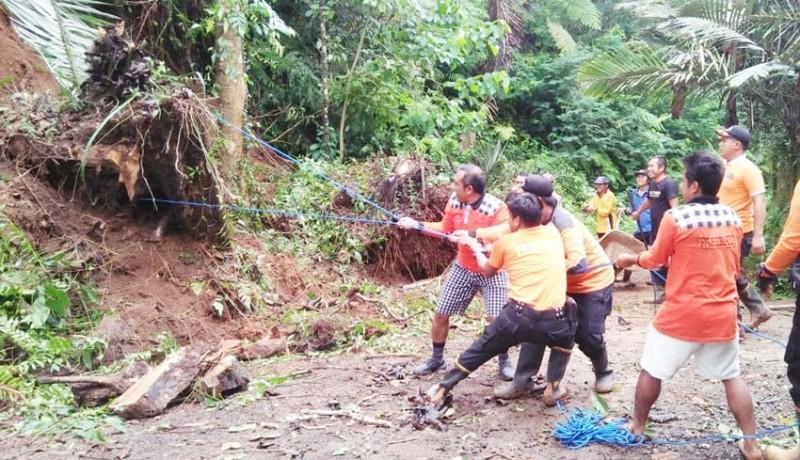 www.nusabali.com-bpbd-karangasem-tangani-pohon-tumbang-dan-longsor