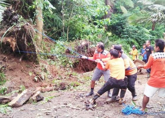 Nusabali.com - bpbd-karangasem-tangani-pohon-tumbang-dan-longsor