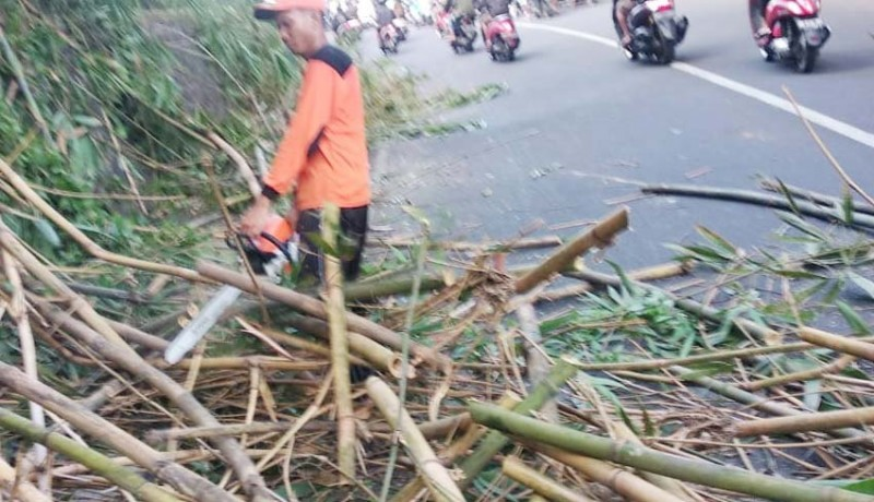 www.nusabali.com-diguyur-hujan-rumpun-bambu-tumbang-penuhi-jalan