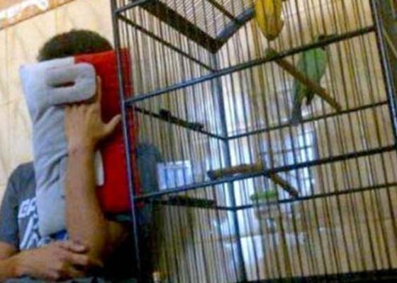 Nusabali.com - bayar-hutang-nekat-curi-burung
