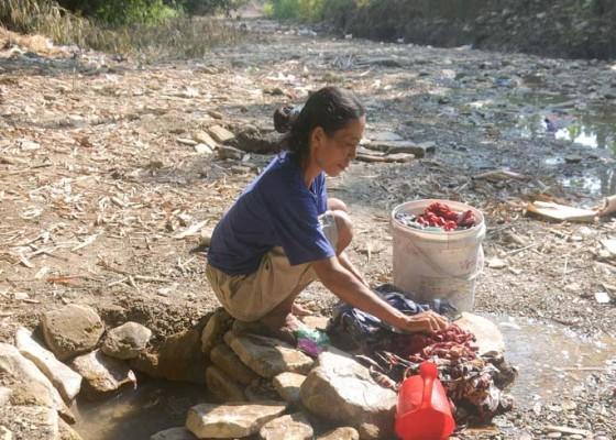 Nusabali.com - mencuci-di-sungai-yang-mengering